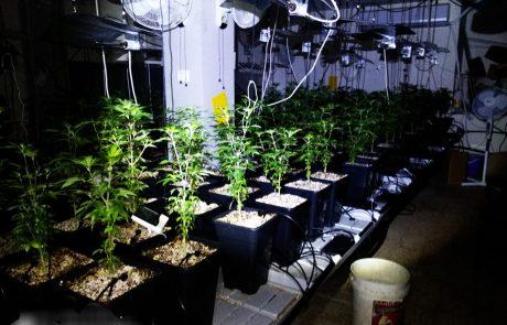 המשטרה עצרה חשוד בגידול וייצור סמים במחסן בחולון.