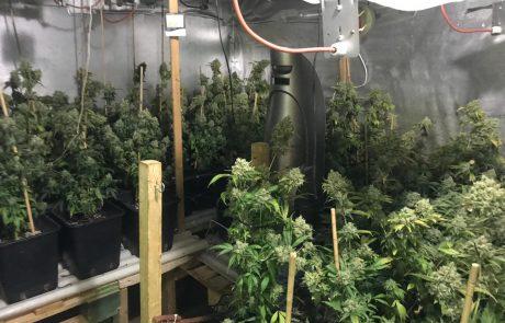 המשטרה עצרה חשוד בגידול וייצור סמים בדירה בחולון.