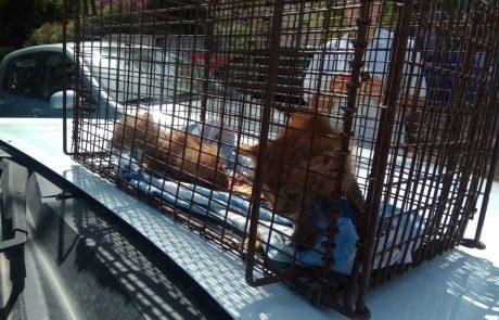 בזכות תושיית אזרחים ומחלקות תברואה והמחלקה הווטרינרית ניצלו גורי החתולים ממוות.