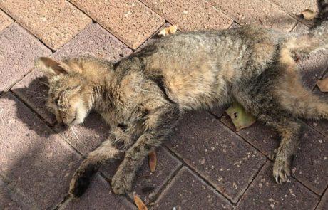 האם יש מרעיל חתולים בשכונת בן גוריון?