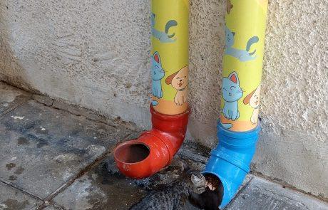 הפתרון האידאלי להאכלת חתולי רחוב מגיע מיניב זריהן תושב העיר חולון